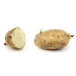 Reading - Potatoes