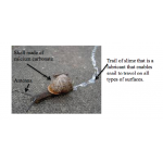 Reading - The Snail