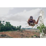 Reading - Palm oil - should we use it