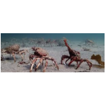 Reading - Spider crabs on the march