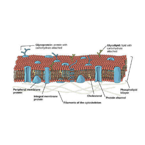 biology chapter 2