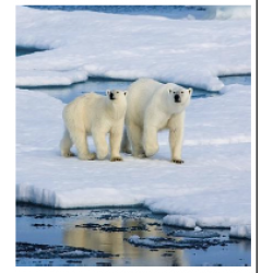 Lockdown 1 - Literacy and Numeracy Arctic Level 1 Paper